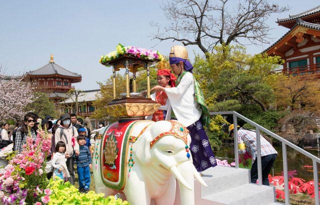 4月:花びより金剛寺・仏生会