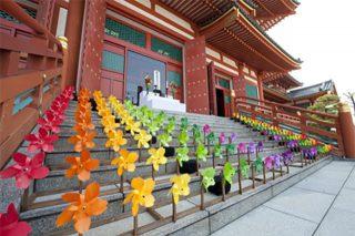花びより金剛寺2011