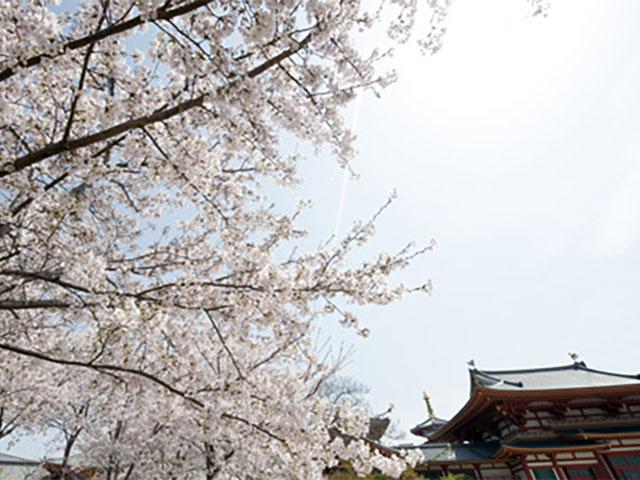 朝からよく晴れて、桜も満開。最高の「花びより」です
