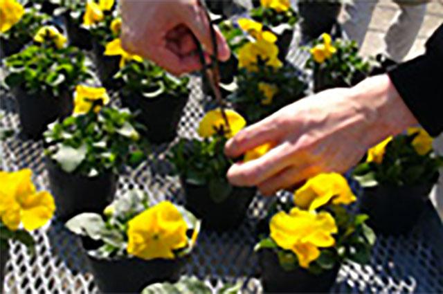 花の摘み取り